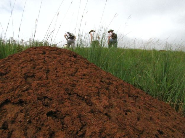 anthill on Edgeware 036.res