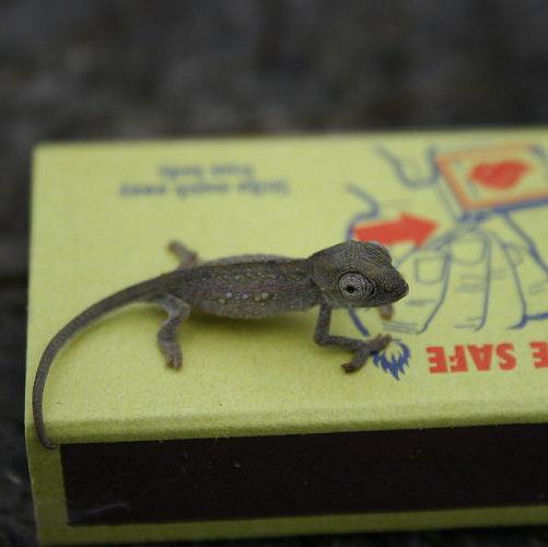 Chameleon baby 121112 CROP
