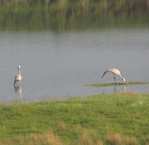 MOZAM 2012 Crane 005
