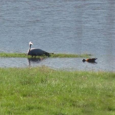 MOZAM 2012 Crane on nest