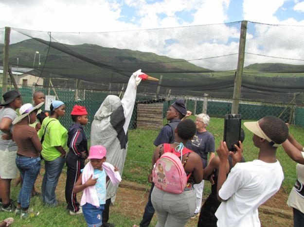 Nkulu is a Crane Mama at Entabeni Hlatikulu.RES
