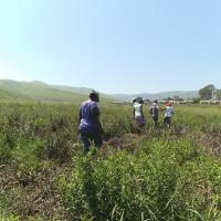 Mpophomeni Hills