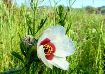 dieter flower