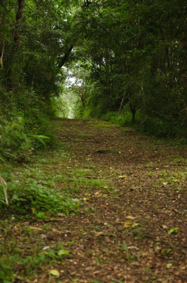 Kilgobbin forest walk.KAREN EDWARDS RES