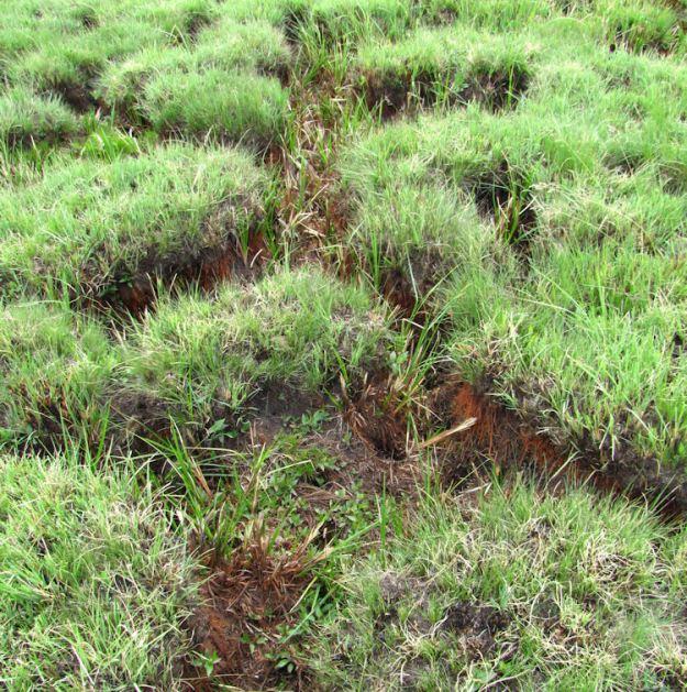 1 umngeni vlei wetland res.crop