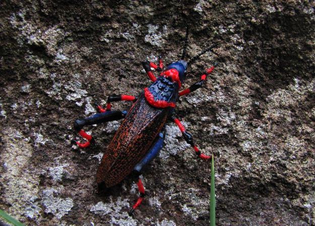 colourful grasshopper R