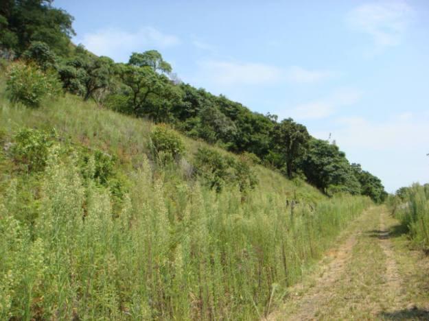 WVC grassland 3