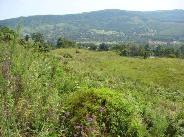 WVC grassland (5)