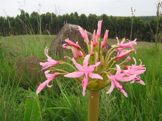 20111220 - Beacon Hill - flora_06
