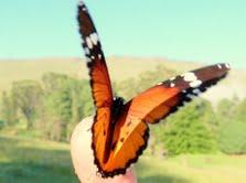 btterfly on finger