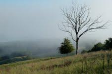 dieter misty morning