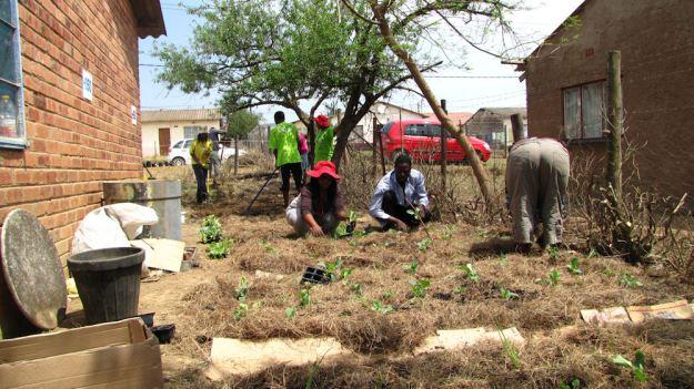 101010 veggie garden in the making R