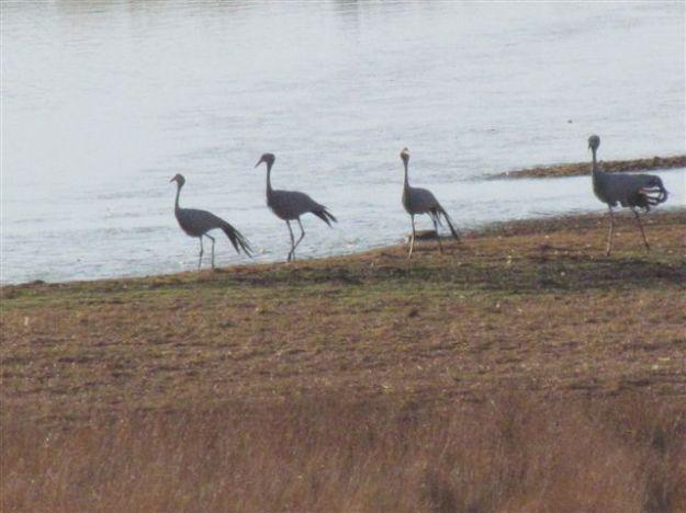 4 cranes running along dam