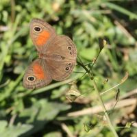 Dargle Wildlife Sightings for July