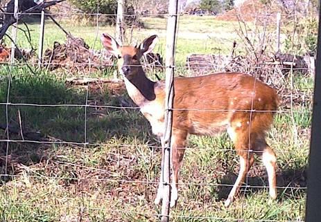 buck at sharenet
