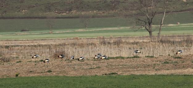 Cranes and farm 009