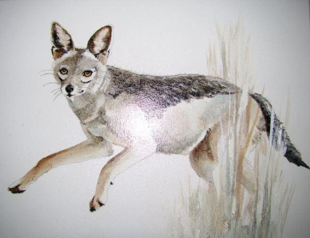 Jackal painting