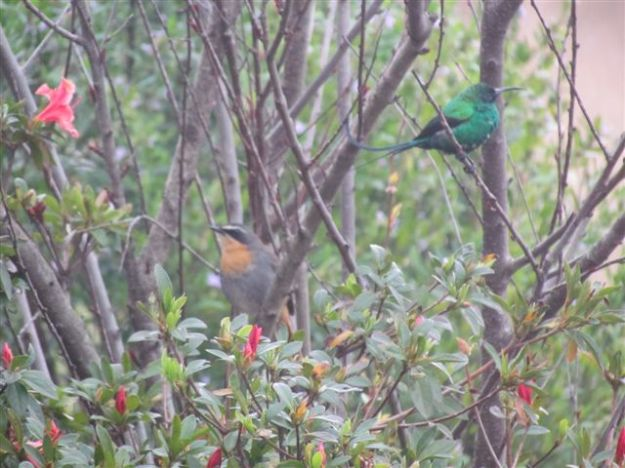 Birds Sept 2012 073