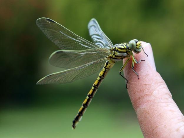 dragon fly ashley crookes