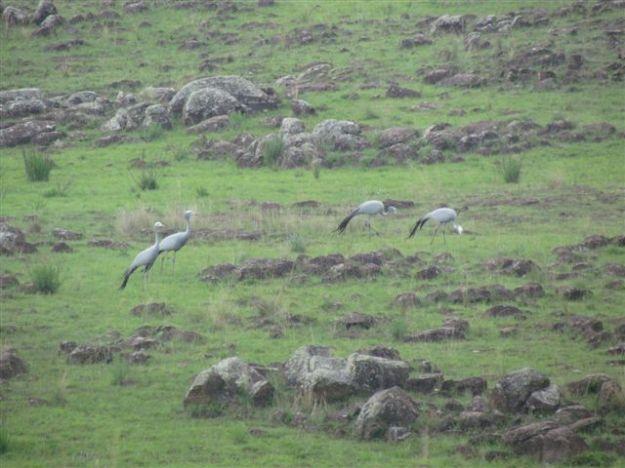 November 2013 sitings crane
