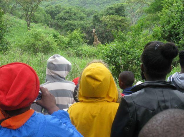 r It's George the Giraffe! by Nkanyiso Ndlela