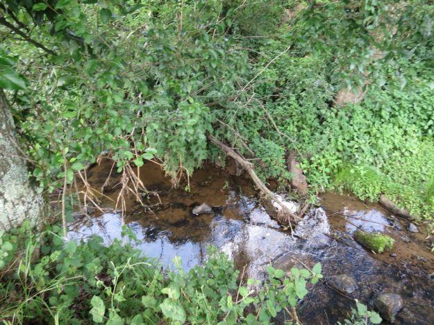 dargle river 3113