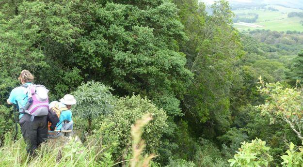 Dargle river begins above forest