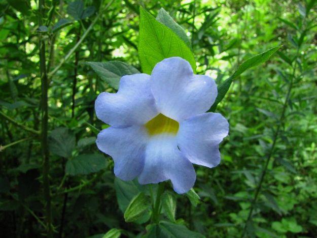 r 1 Mpop Entle stream forest 384