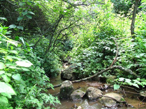 r  Mpop Entle stream forest 387