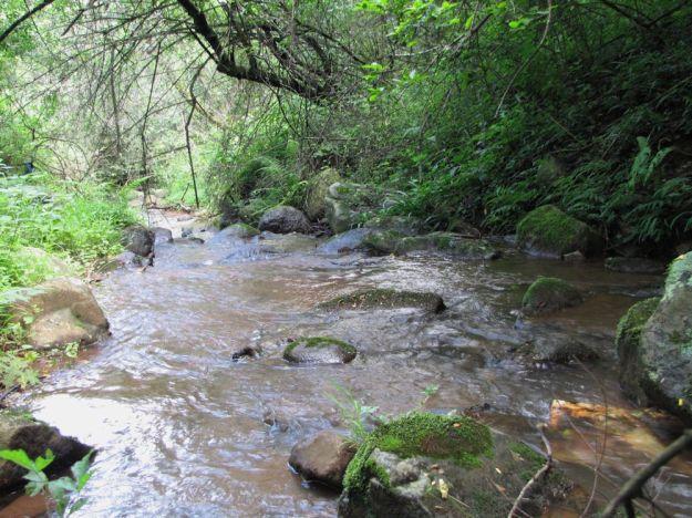 r  Mpop Entle stream forest 453