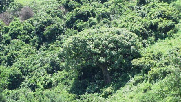 r Mpop Entle stream forest 476