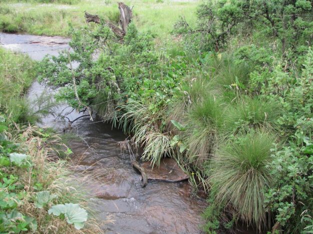 r impendle stream with crocosmia pottsii 138