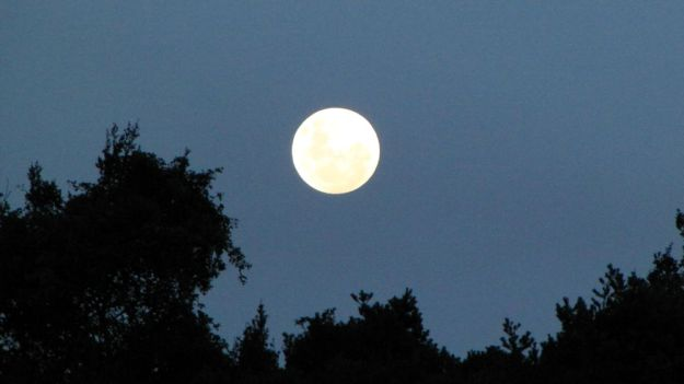 r moon rise over forest