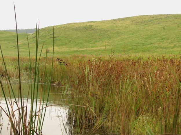r wetland - Nikki Brighton