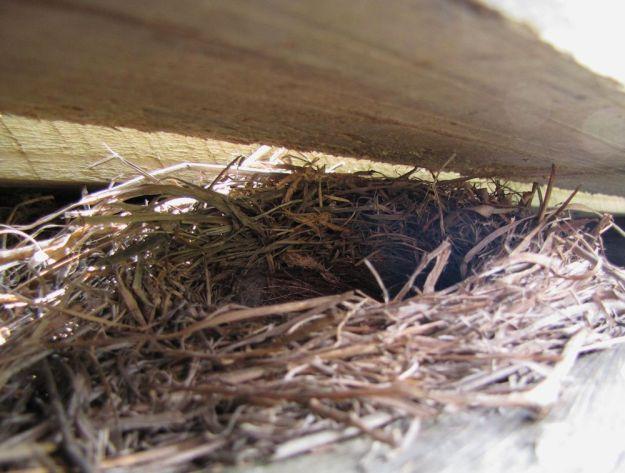 summer nest wagtail raft