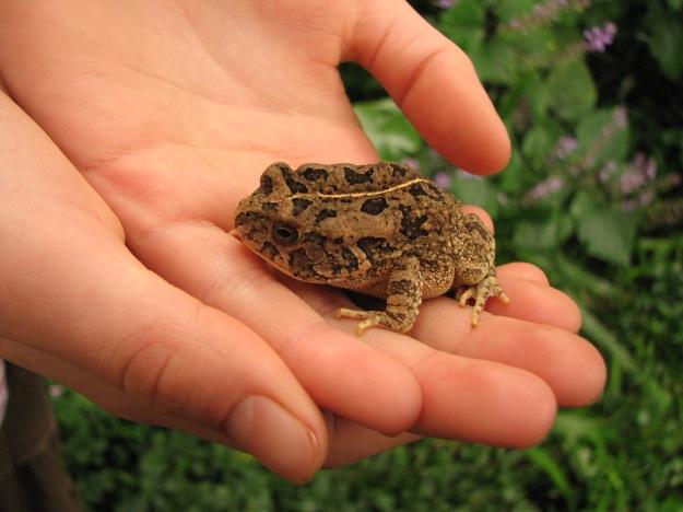 tigerlily holding frog 3