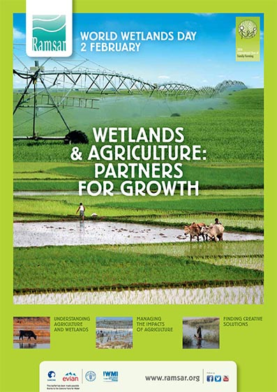 wetlands and agriculture