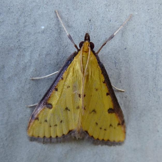 2014 02 Moth 04