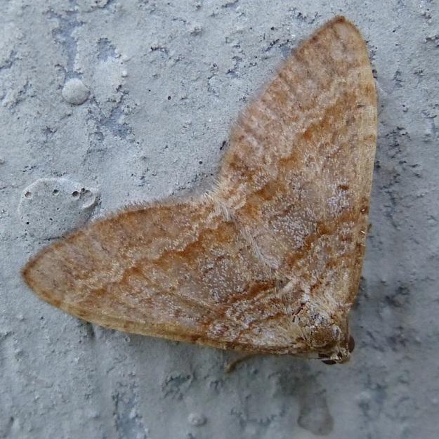2014 02 Moth 07