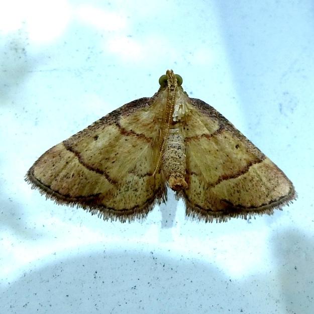 2014 02 Moth 08