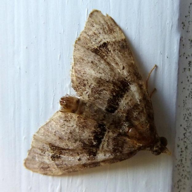 2014 02 Moth 10
