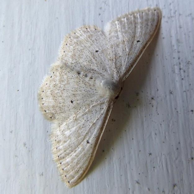 2014 02 Moth 11