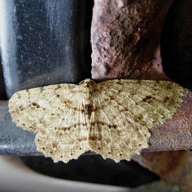2014 02 Moth 12