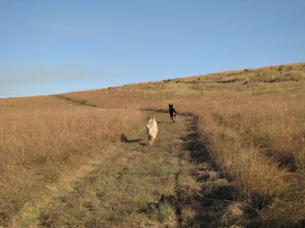 dogs running in winter grass