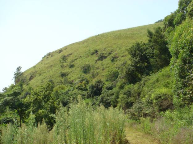 WVC - extensive grassland