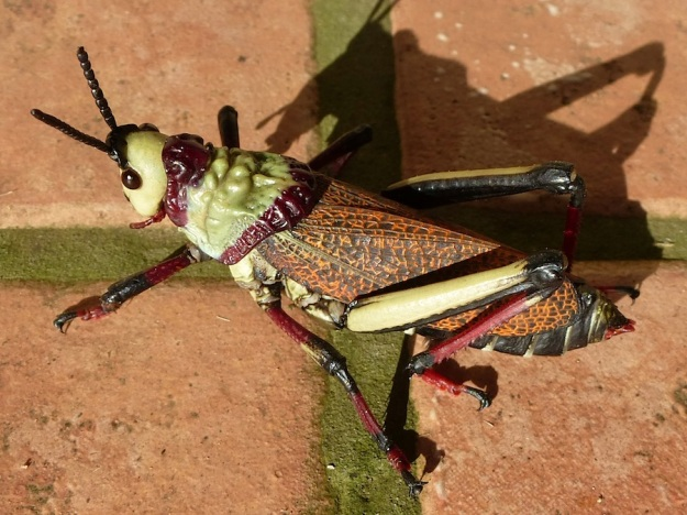 Insect Foam Grasshopper