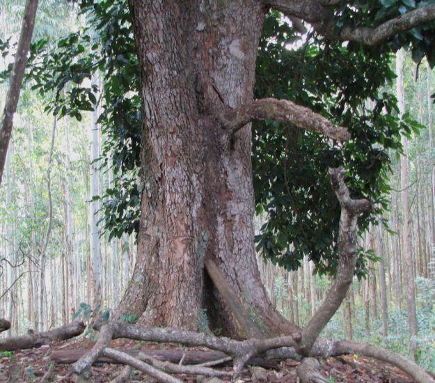 worlds view avo tree