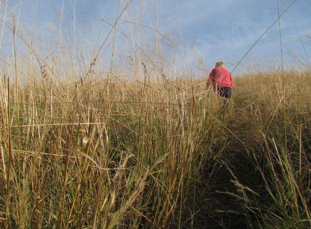 worlds view ellie in grassland