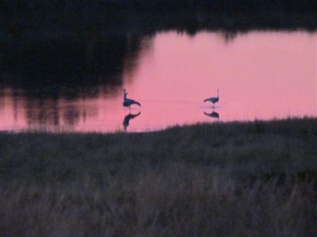 3 blue cranes
