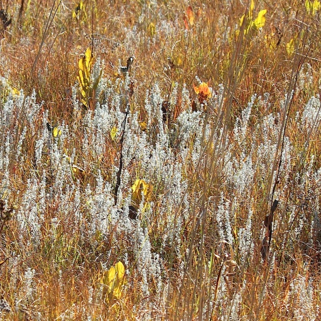 Plant Autumn veld